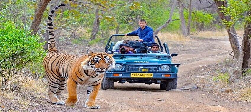 Delhi Agra Ranthambore Jaipur Tour Package